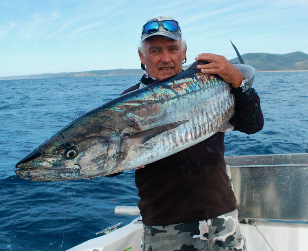 Spanish Mackerel Under Threat.