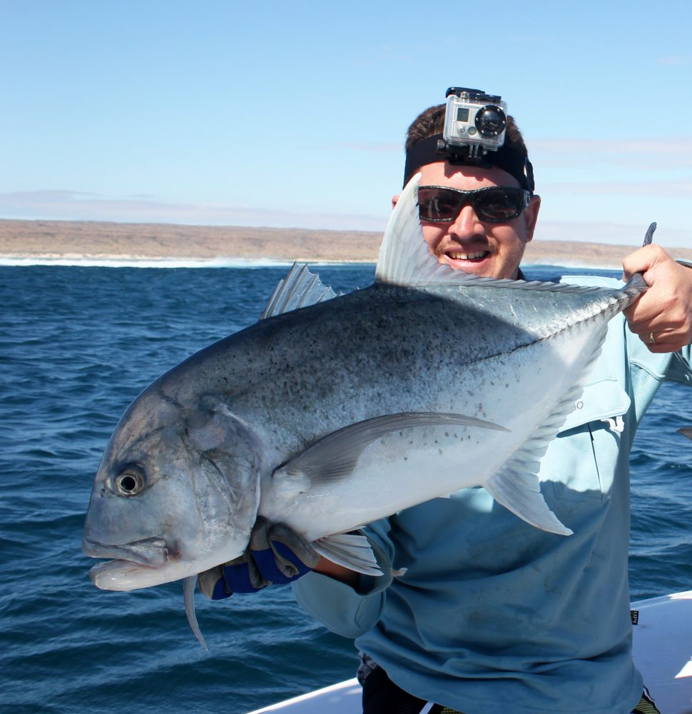 GT are likely fish that push bait fish to the surface.