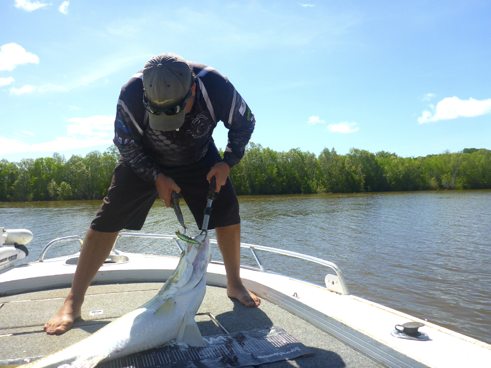 Getting the hooks out of the fish as quick as possible is just one obstacle you need to manage prior to releasing a big barra.